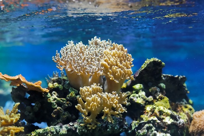 Sunscreen threat to coral reefs, study finds
