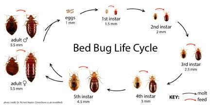 Fighting the bed bug invasion