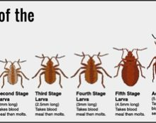 The growing problem of bed bugs